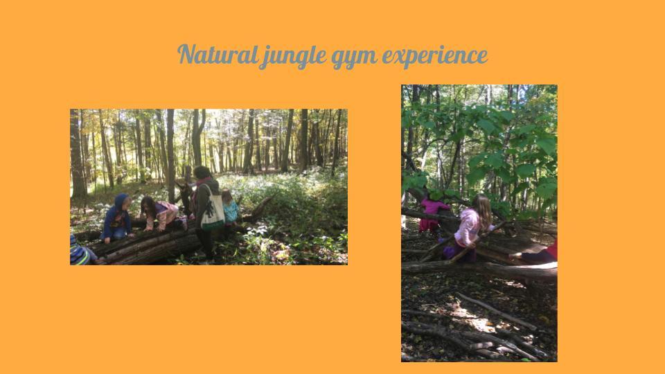 Forest Adventures 4.jpg