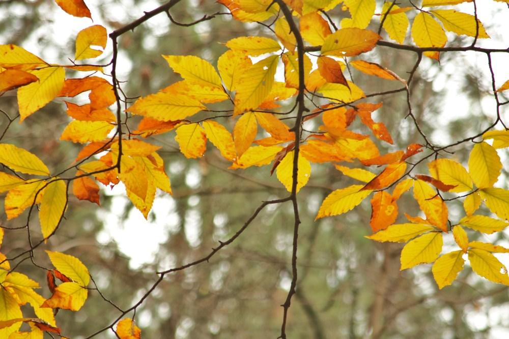 304B Autumn Veil - 10-31-11.JPG