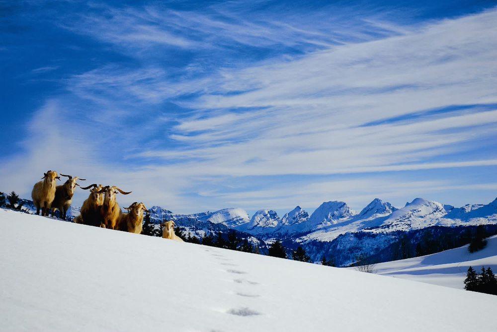 Willkommen zu Hause    in den Alpen.    Reservieren Sie hier