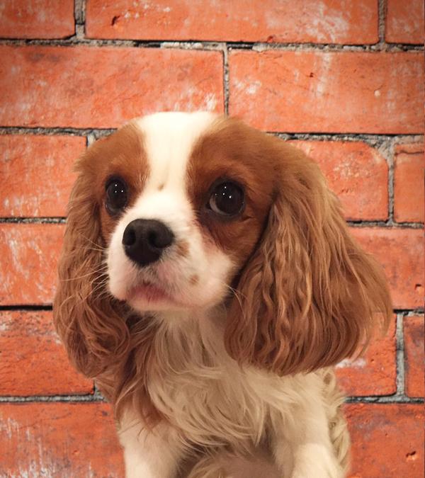 Henry, The Dog