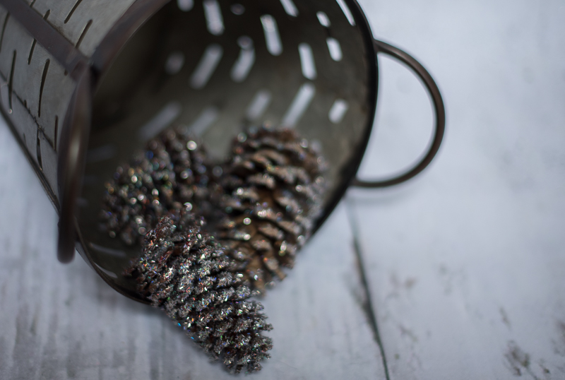 pinecones-2870.jpg