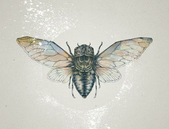 The Meaning of the Cicada -
