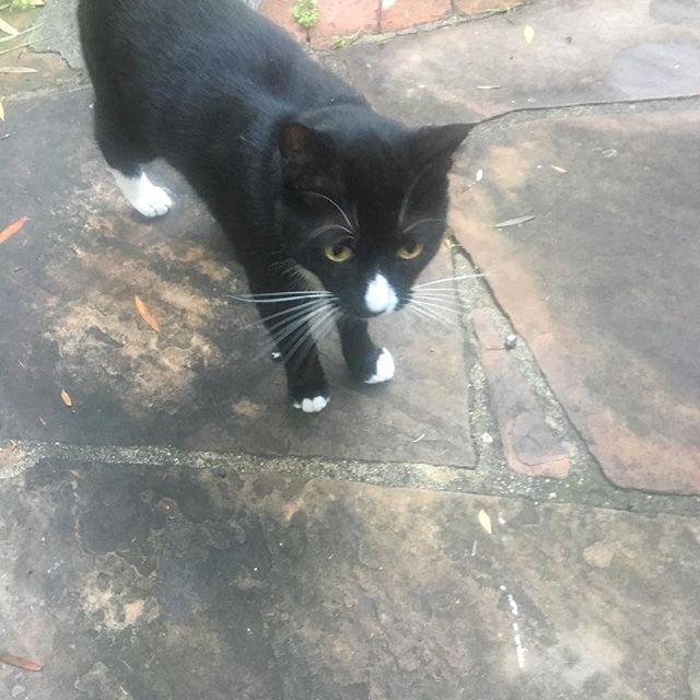 Cats on the blacktop.... #jerrygarciaband #chippylife #catunderthestars