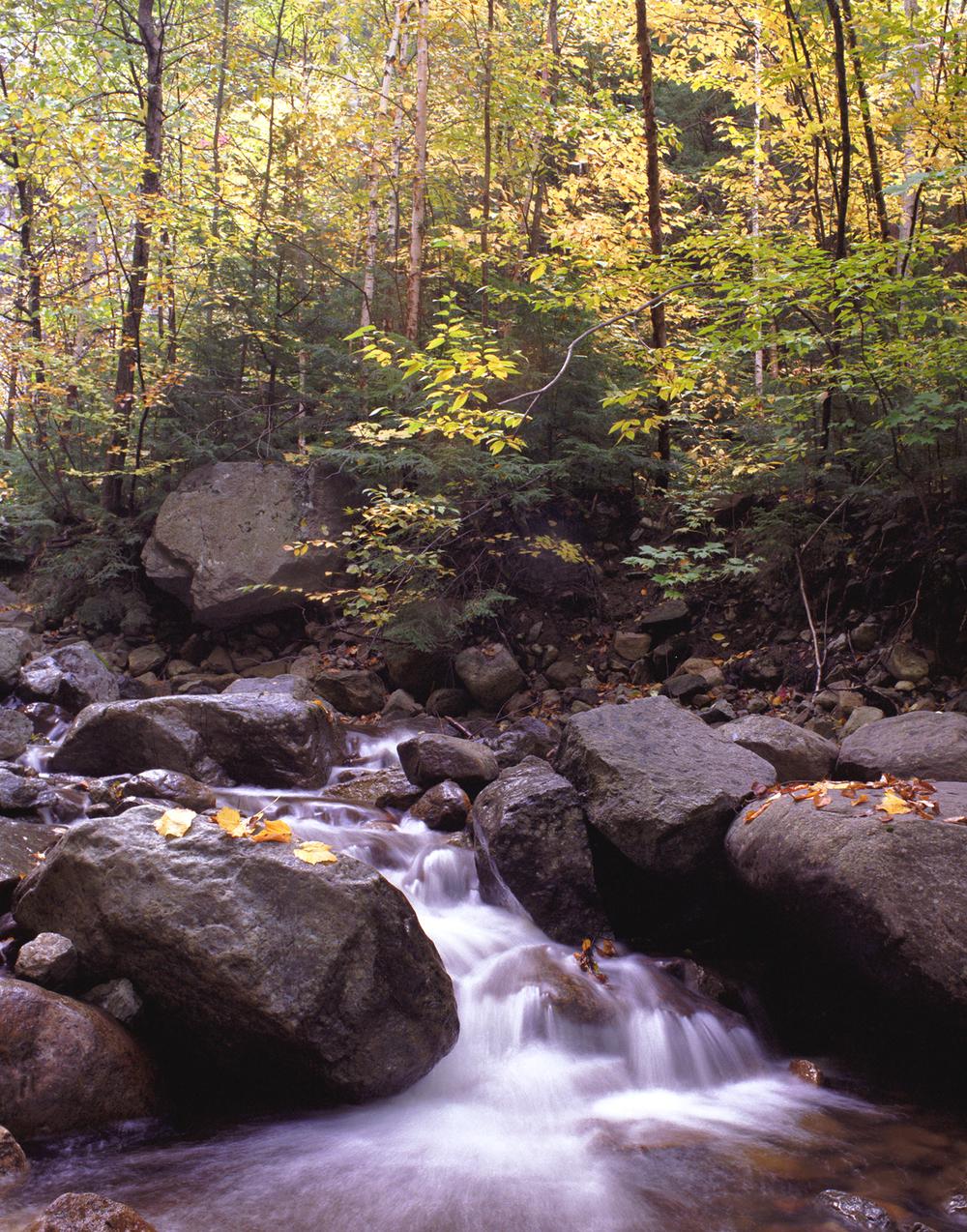 Saranac Stream