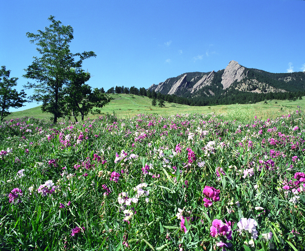 Flowers and Flatirons