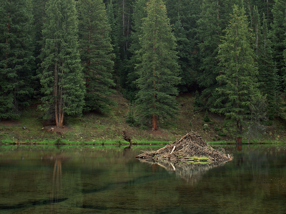 Ashcroft Beaver Pond