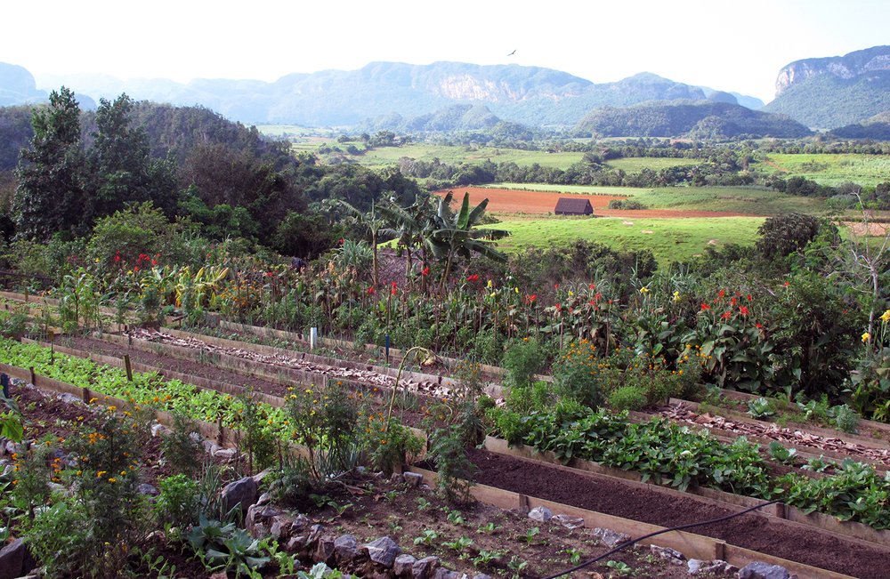 The verdant Vinales Valley