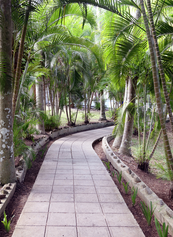 Hemingway's Path