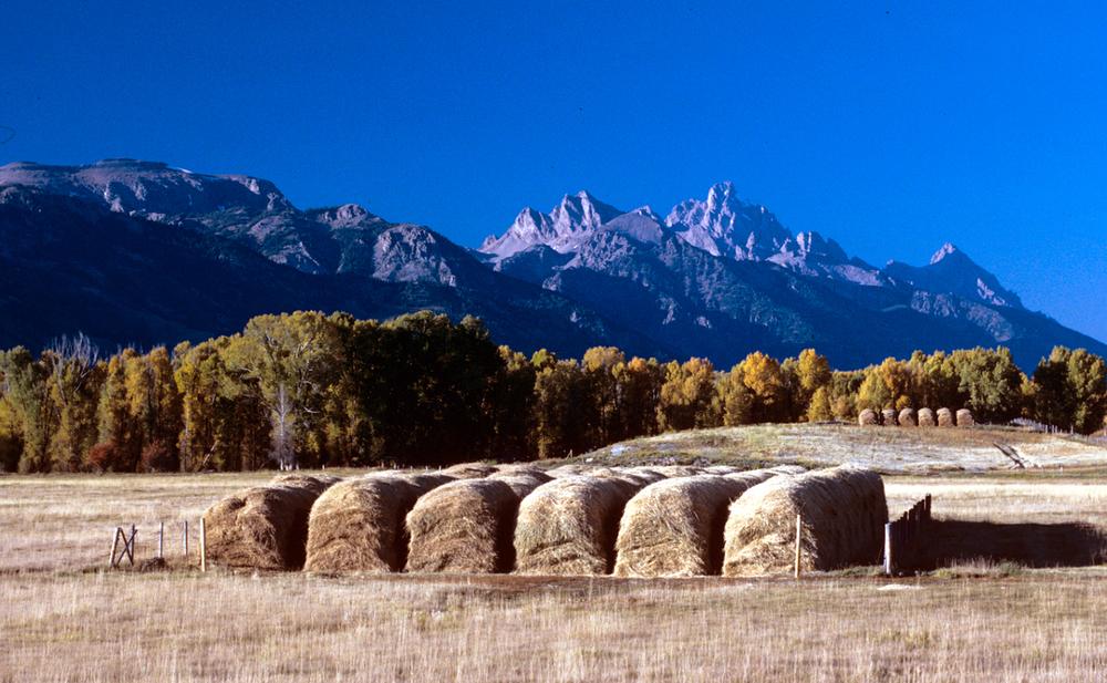 Teton Hay Loaves