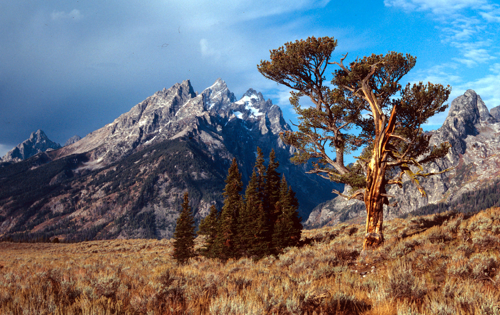 The Old Patriarch