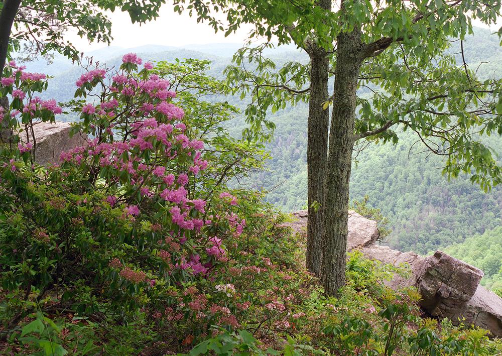 Rhodos on the Blue Ridge