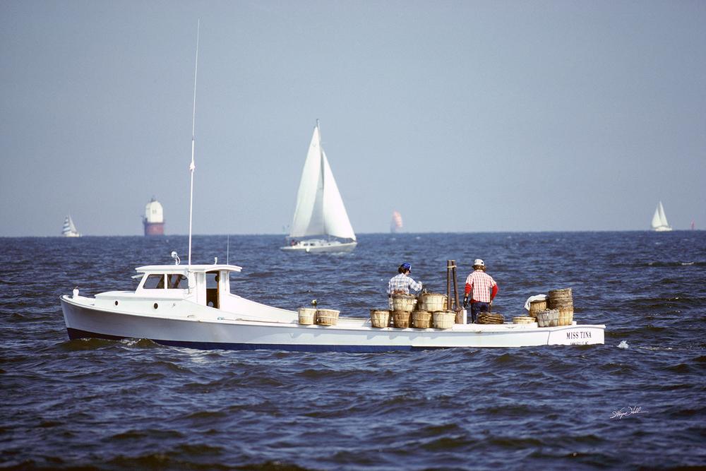 Crabbing the Chesapeake