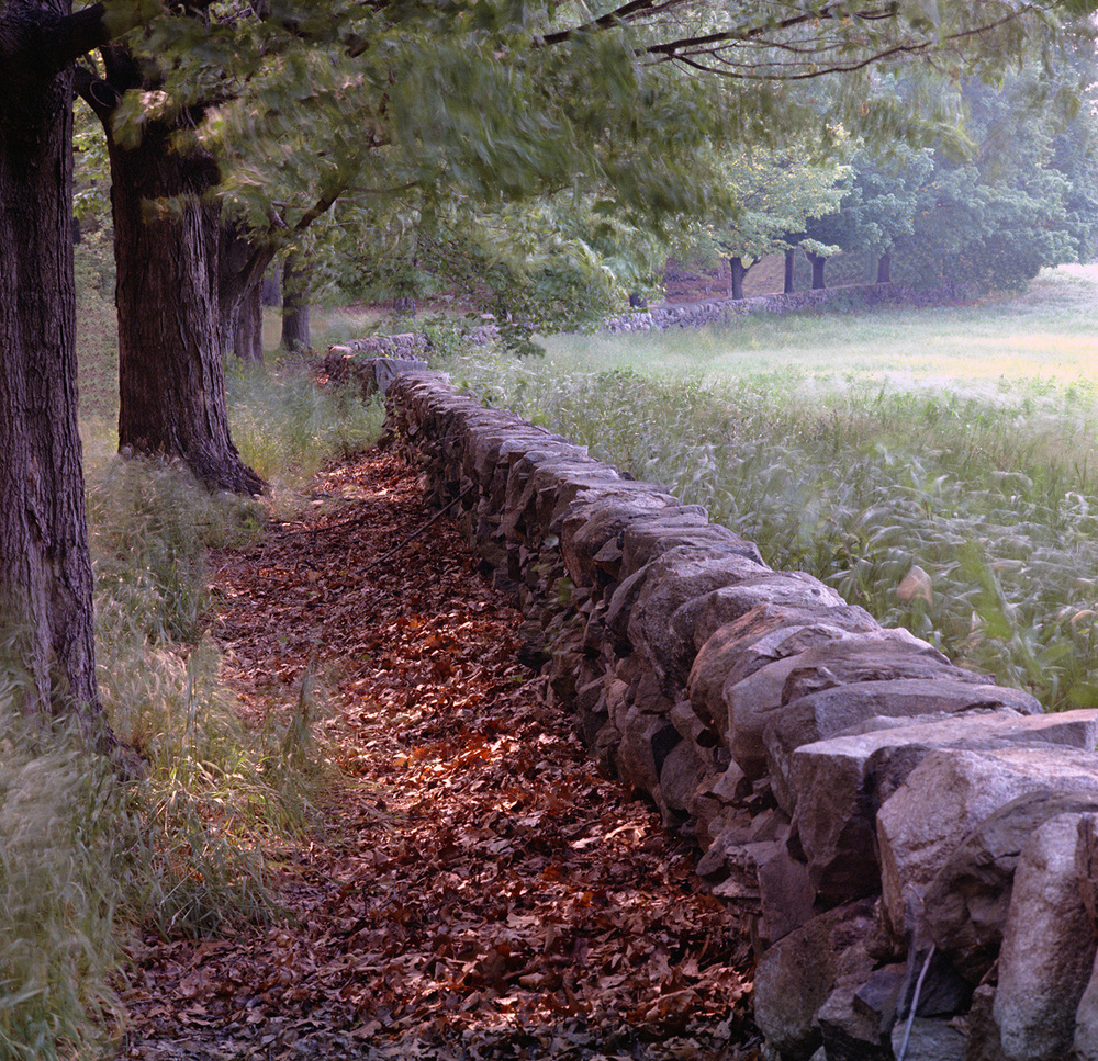 Wellesley Wall