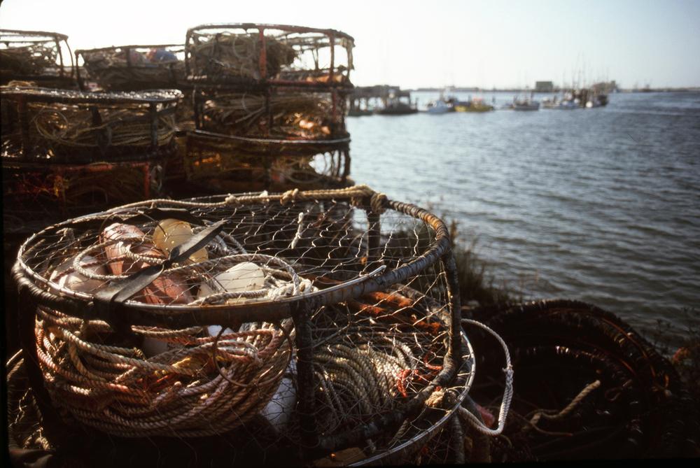 Coos Bay Crabtraps