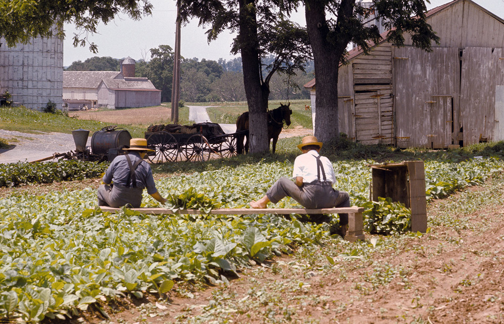 Amish Gardening