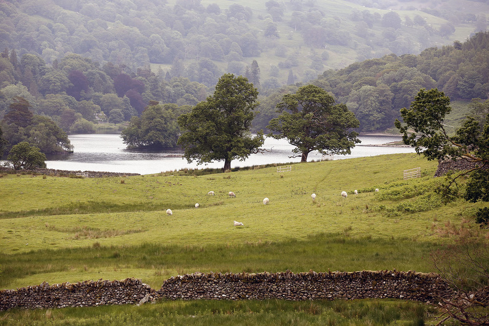 Sheepscape in the Lake District