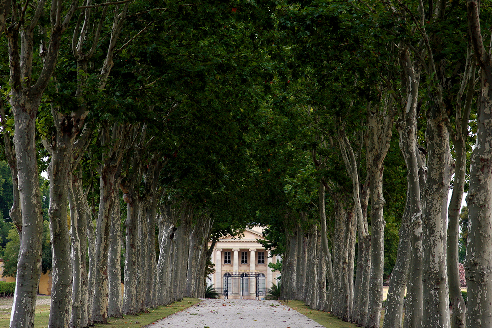 Approaching Chateau Margaux