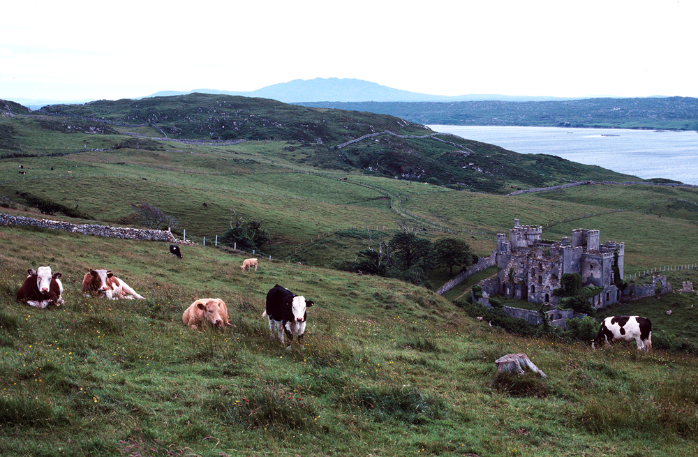 Of Cows and Castles