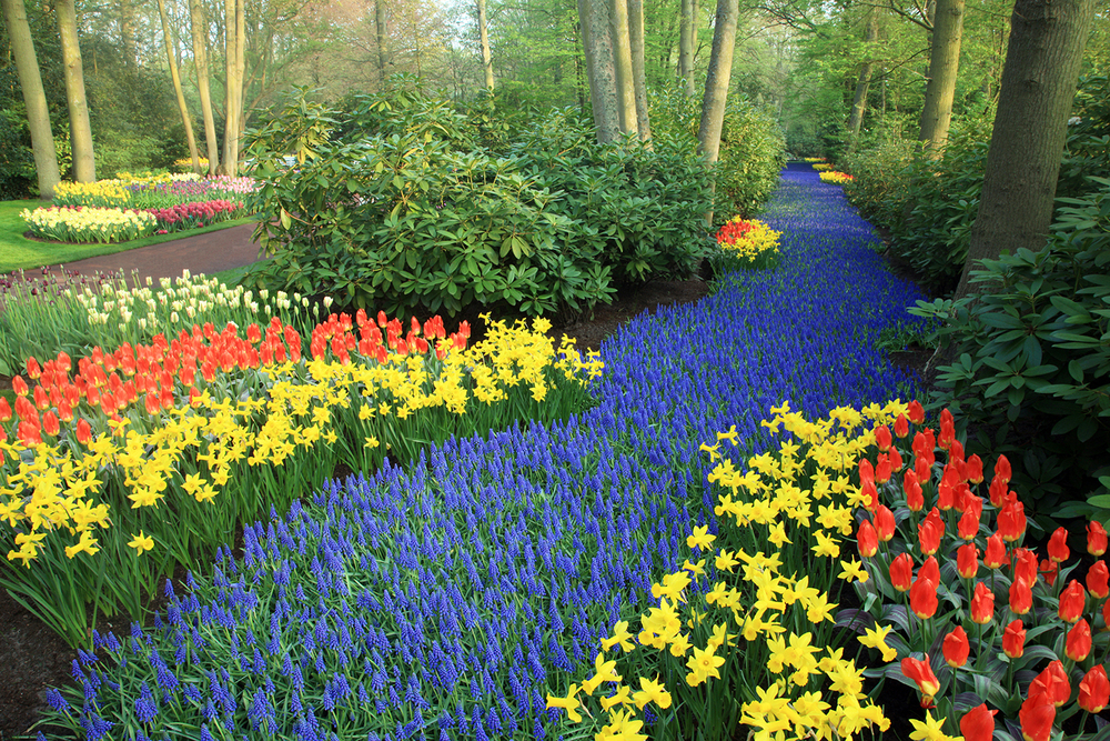 Path of Fragrant Flowers