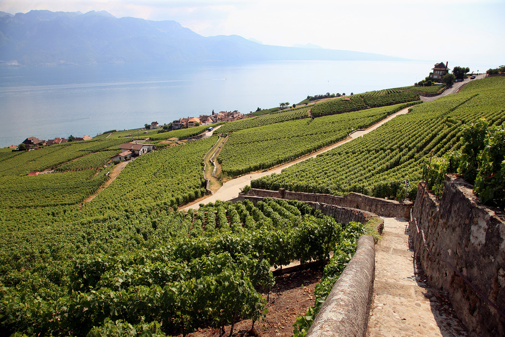 Vineyards at Lake Geneva