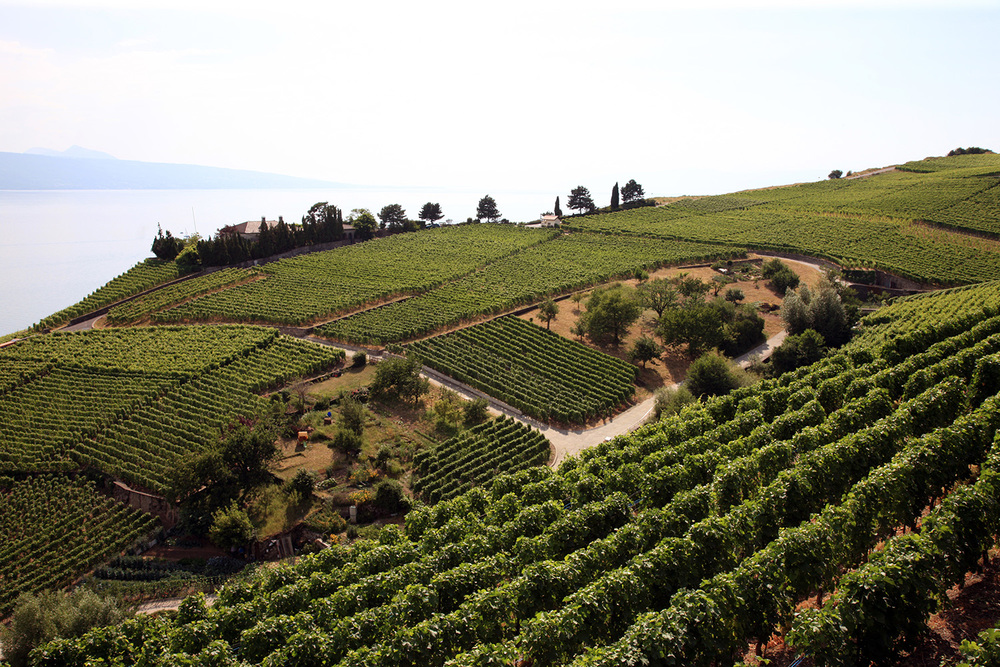 Lavaux Vineyard Terraces