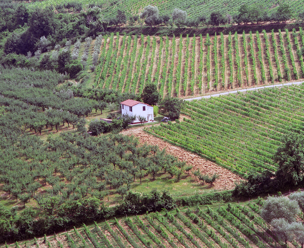 Vineyards in Montalcino
