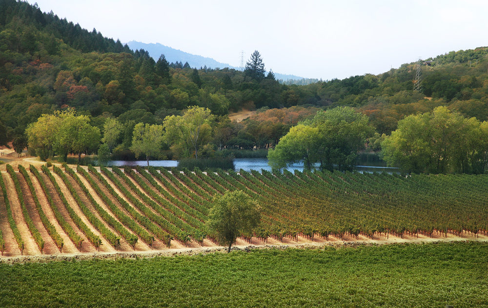 The Vineyards at Joseph Phelps