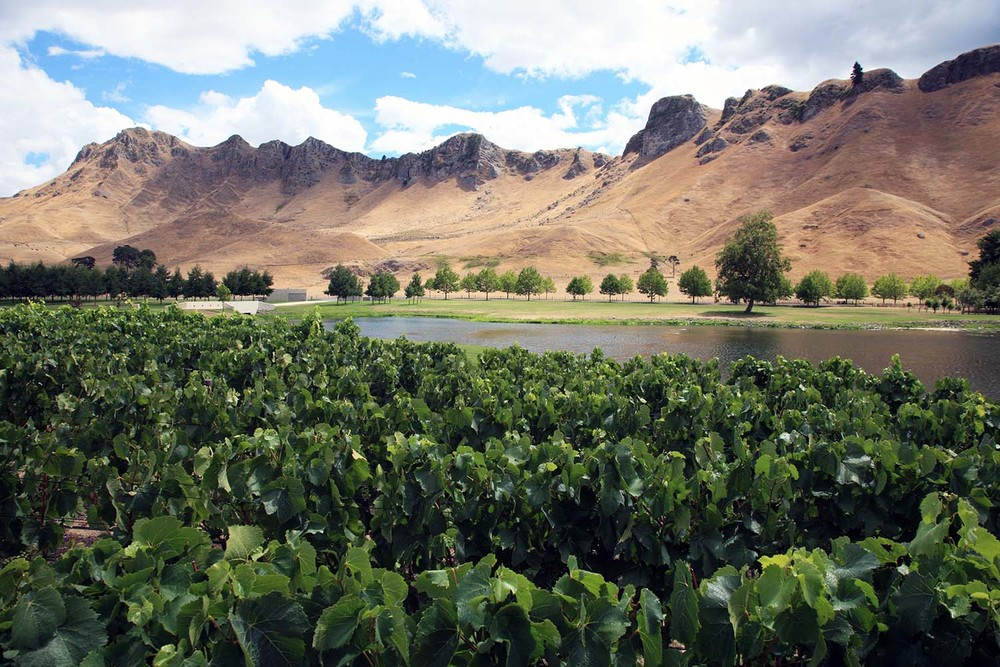 The Vineyards of Craggy Range