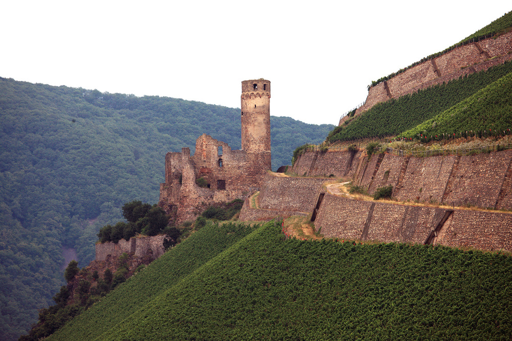 Castle and Vineyards