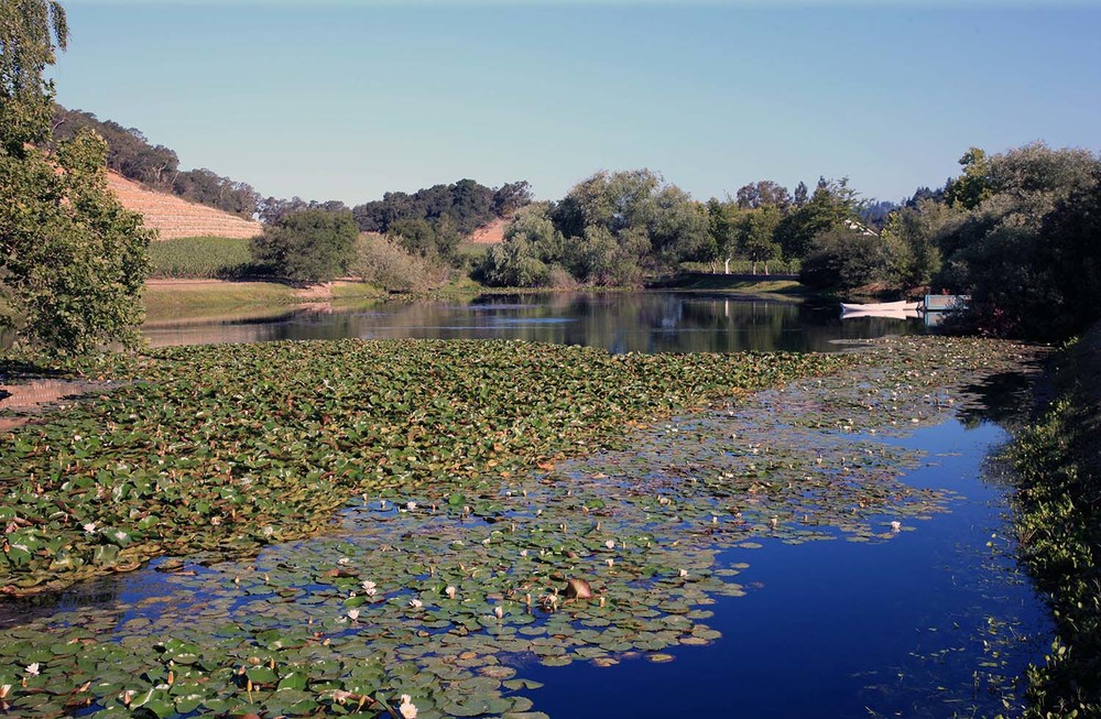 The Pond at Quintessa