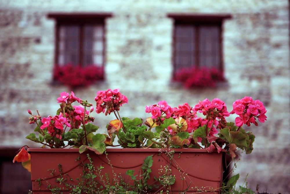 Flower Box in Giverny
