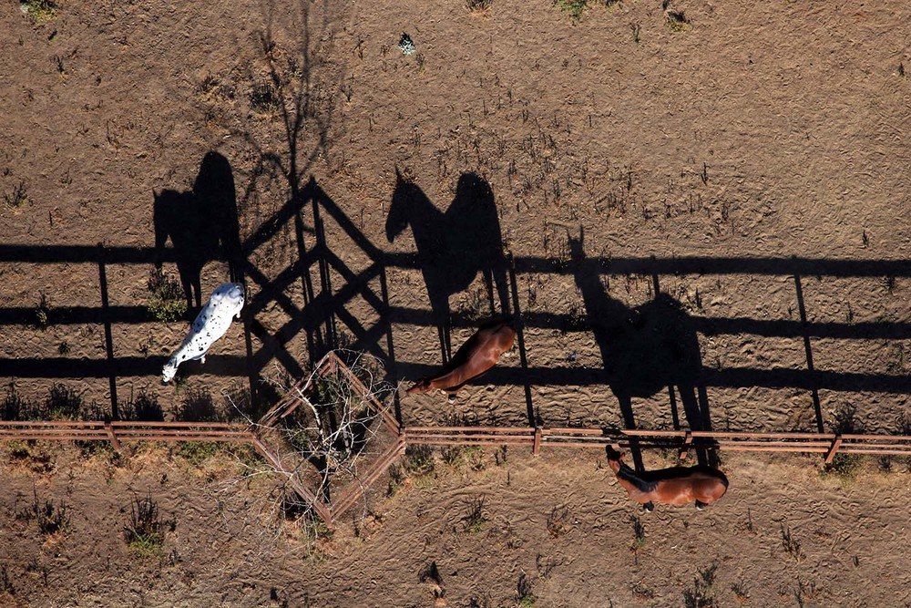California Horse Shadows
