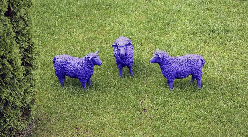 Bah, Bah Purple Sheep...