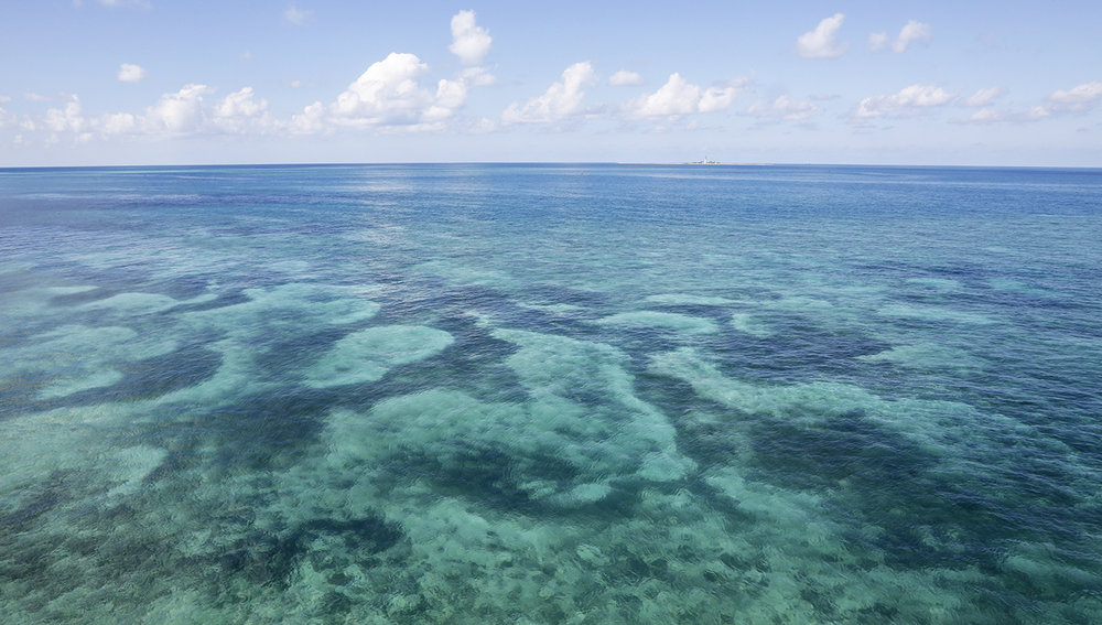 Coral Reefs at Dry Tortugas NP