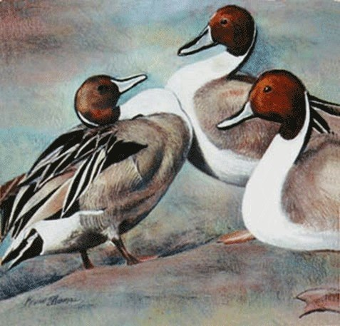 """Pintails"" • 14"" x 15"" • oil pastel on toned paper • NFS"