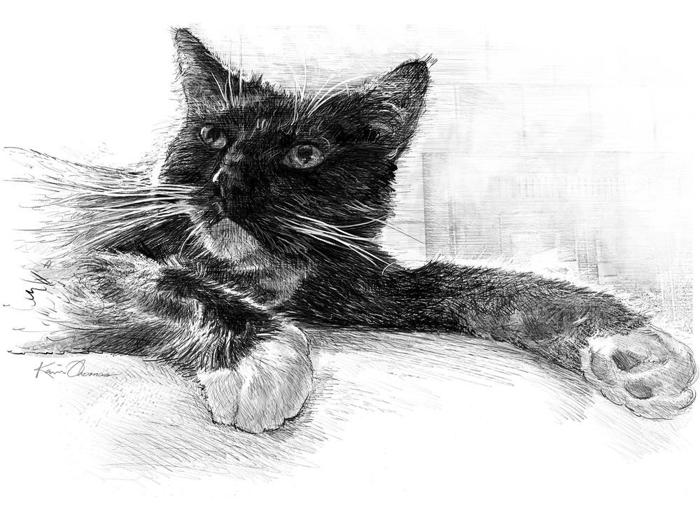 """Elvis"" • 12 ""x 15"" • Drawn as a digital rendering of our tuxedo kitty"