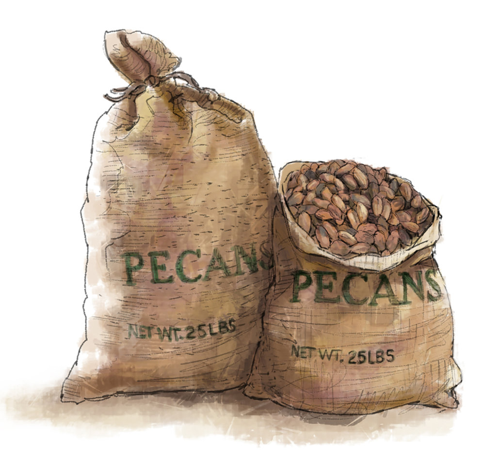 """Bags of Pecans"" • Digital Illustration, Tales N' Trails Museum, Nocona, TX. © KT"