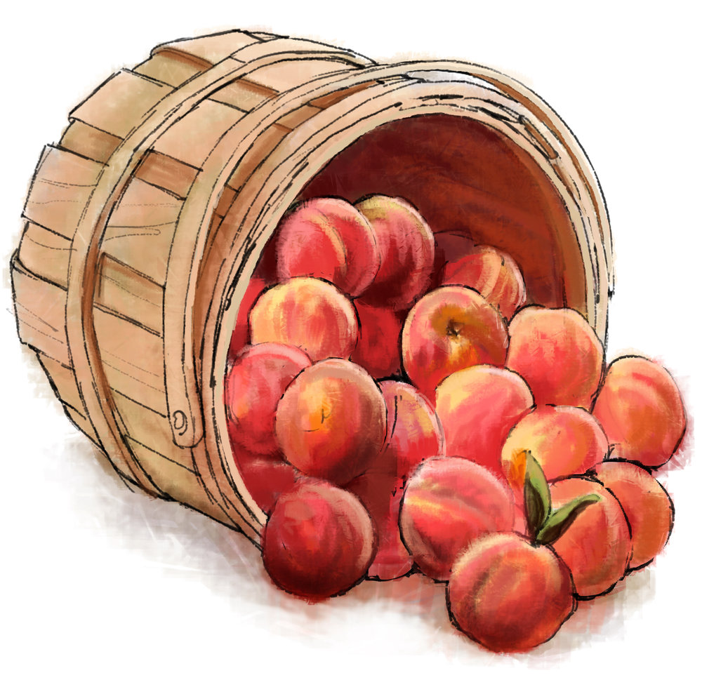 """Basket of Peaches"" • Digital Illustration, Tales N' Trails Museum, Nocona, TX. © KT"