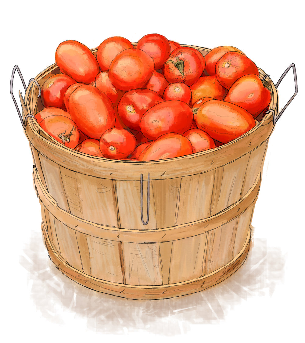 """Tomato Basket"" • Digital Illustration, Tales N' Trails Museum, Nocona, TX. © KT"