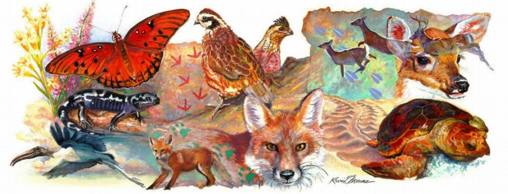 """Header Art"" FWC- Florida Fish and Wildlife Conservation Commission • Mural designed- hand painted traditionally in watercolor, digitally animated within PhotoShop • Tallahassee, FL © KT"