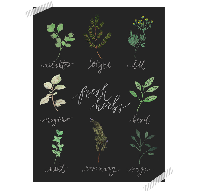 Hand painted custom herb chart poster