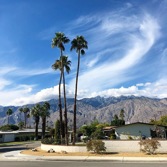 Just back from a quick weekend in the desert, filled with delicious brunch @cheekysps, drinks poolside @acehotelpalmsprings, people watching (with more brunch) @parkerpalmsprings and afternoons sitting in the sun at our awesome @airbnb 🌴🏔🌵