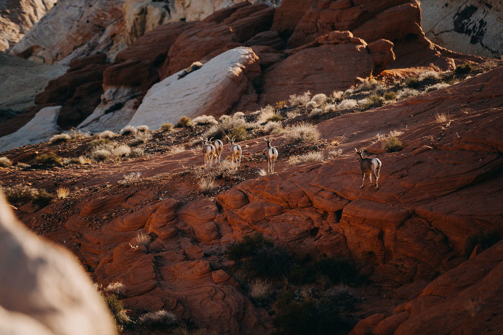 Join the Adventure - Utah - Day 7 (90 of 140).jpg