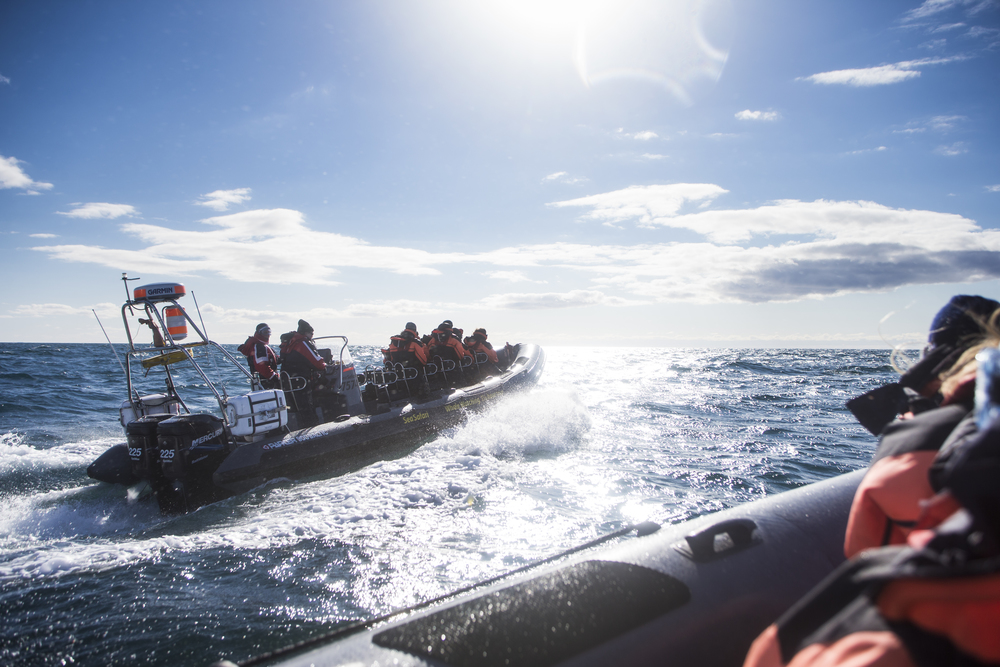 Express Rib boat sightseeing and bird watching tour including Puffins