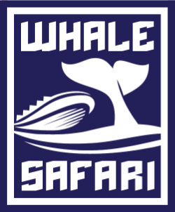 Whale Safari Small Groups Whale Watching Tour Operator