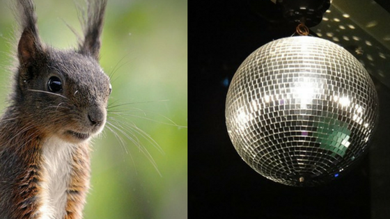 squirrel disco ball.png