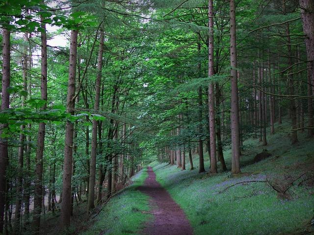 forest-2377194_640.jpg