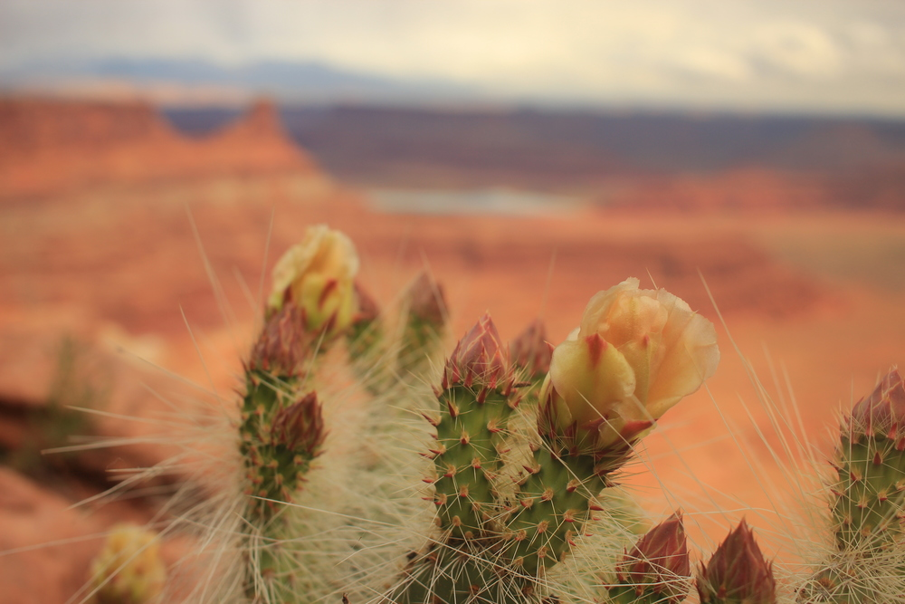 April & May are the best times of the year to see beautiful cactus blossoms. For a free flower guide to identify what you see check out  https://www.nps.gov/arch/learn/nature/upload/GLOSSARY.pdf