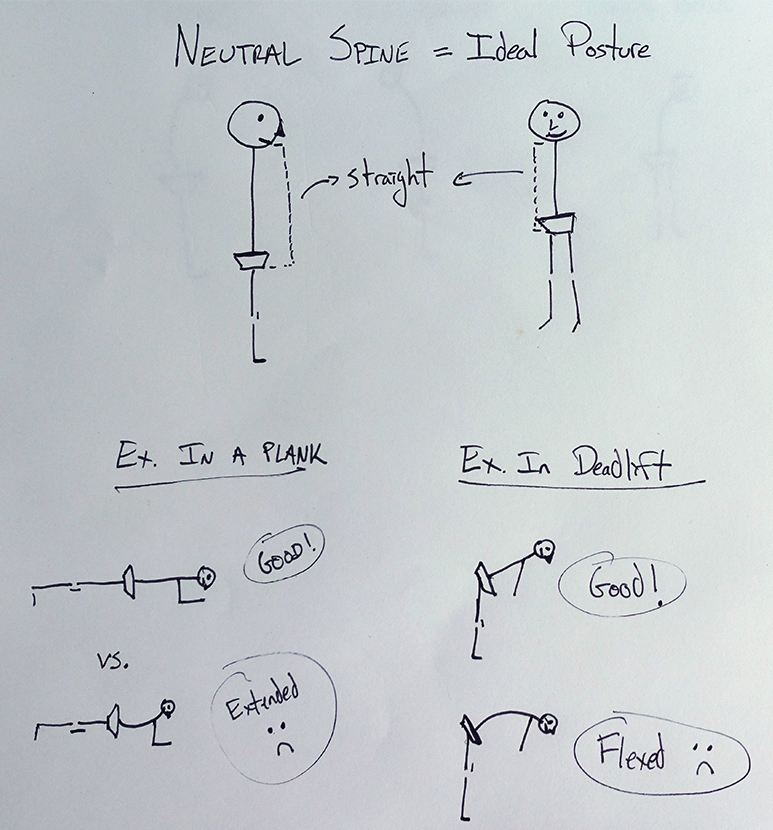 Obviously the spine has a natural curve, but that's well beyond my artistic skill! Either way, everything from the pelvis up should be fixed into a stiff, neutral position during effective ab/core training. Some common mistakes are to over-extend in the plank and to flex the spine in a deadlift.