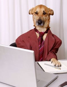 business professional dog